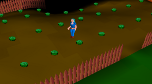 Falador cabbage patch.png